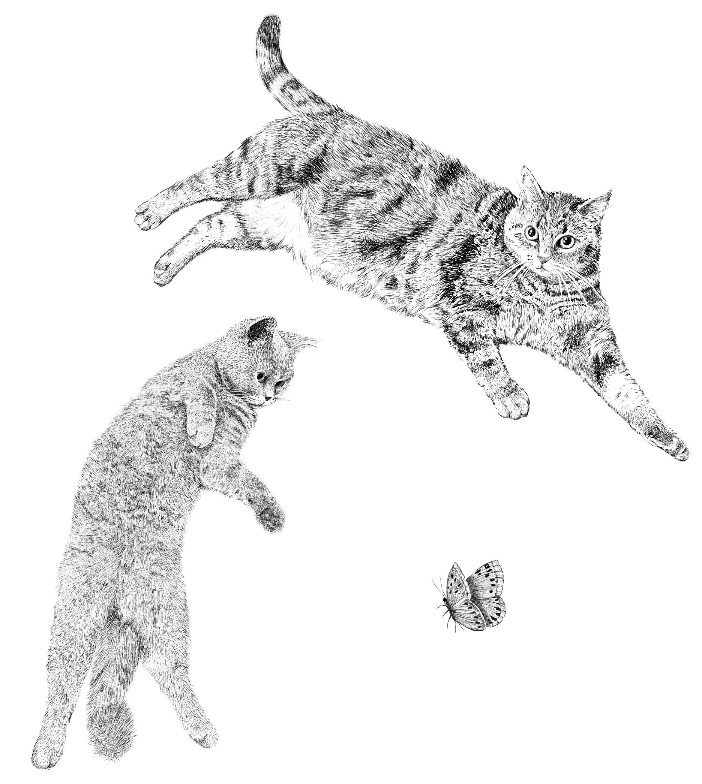 illu_cats